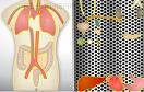 人體結構拼圖2遊戲 / 人體結構拼圖2 Game