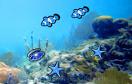 海底記憶遊戲 / 海底記憶 Game