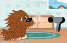 狗狗的完美改造遊戲 / Puppy Perfect Makeover Game